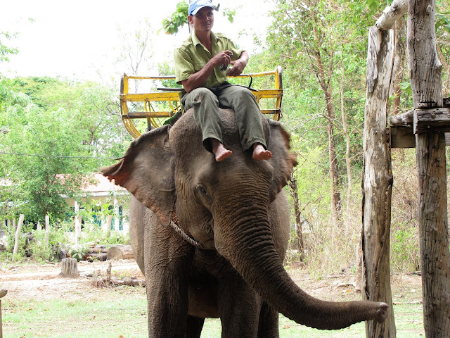 elephant riding basket yok don vietnam