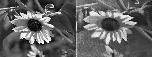 composing values study of sunflower Jan-31-2019 greyscale side by side