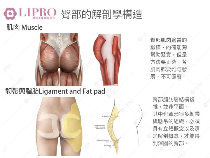 臀腿解剖構造-肌肉、韌帶脂肪