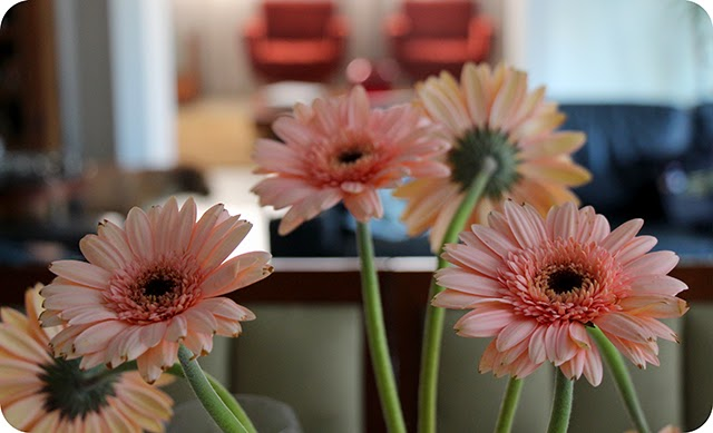 Flor : Gérbera Rosa