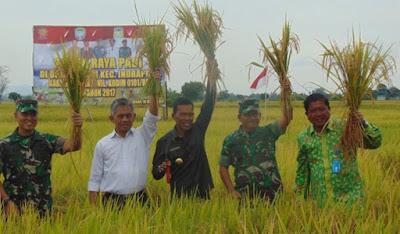 PEMKAB Aceh Besar Dan TNI Sukses Dalam Panen Raya Produksi Padi