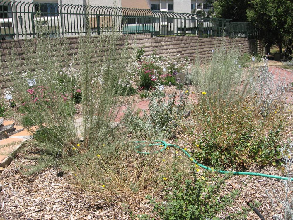 Mother Nature's Backyard - A Water-wise Garden ...