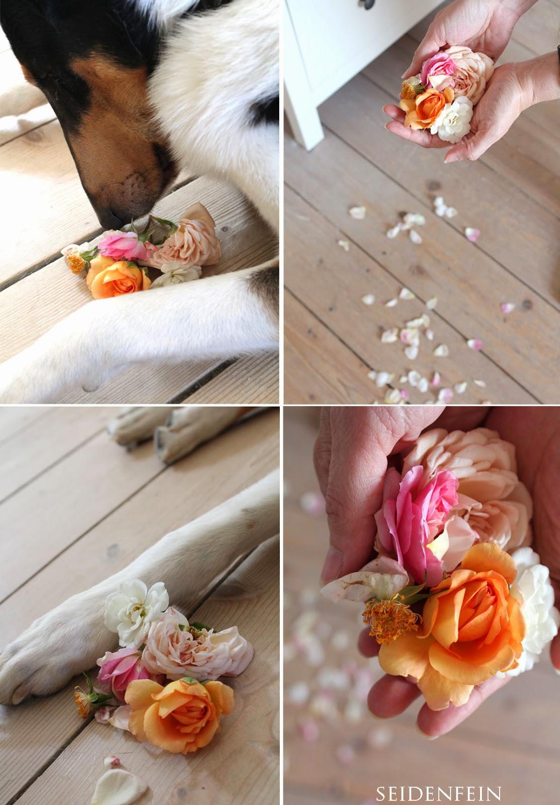 rosenblüten trocknen im backofen