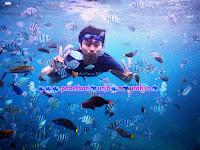 snorkeling bersama ikan di karimunjawa