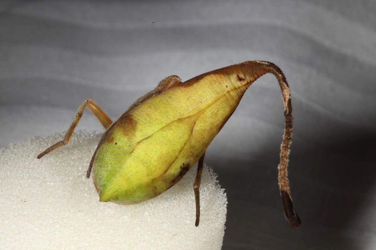 leaf%2Bspider2.jpg