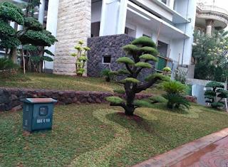 taman depan dengan bonsai dolar
