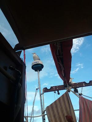A seagull perched atop Blackthorn's radar.