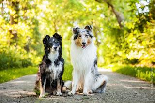 manter o peso de cães