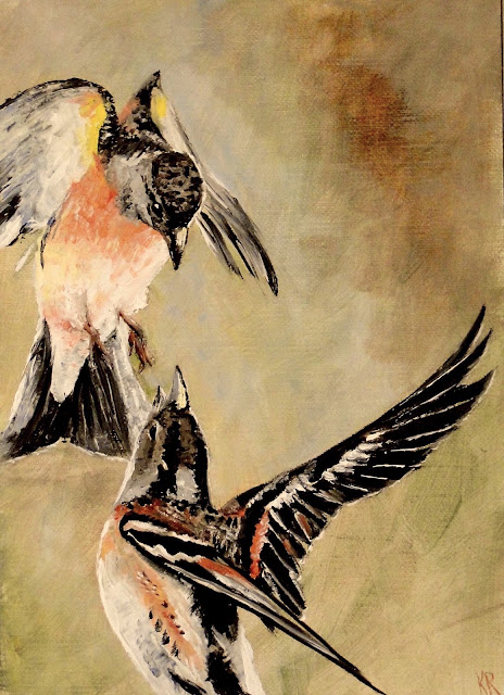 a series of little oil paintings of birds, 5 tweets in 5 days, this one is of bramblings