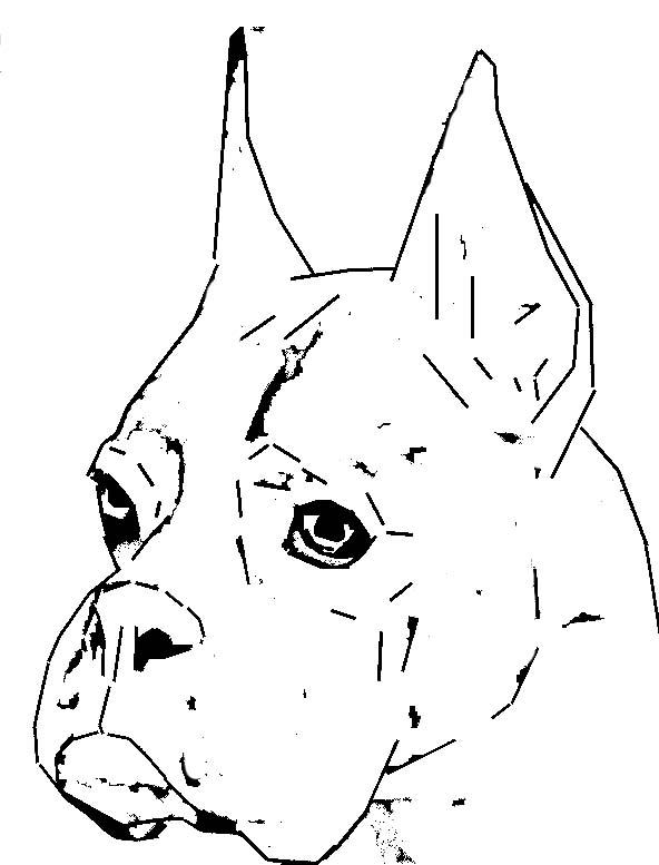 Imagenes De Perros Boxer Para Colorear Imagui