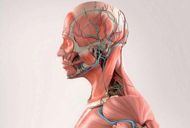 El acúfeno puede ser modulado por movimientos de la musculatura de ...