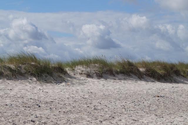 Der Strand von Wendtorf im Naturschutzgebiet Bottsand. Naturbelassene Dünen in der Nähe von Kiel!