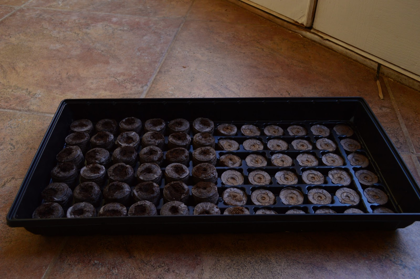 starting garden seeds, peat plugs