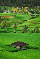 2Bali ricefields (Photo Credit: Claudia Fernández Ortiz (@killpeopleinyourmind) on Unsplash) Click to Enlarge.