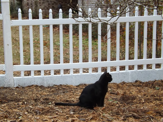Bandido Boy Is Proudly Showing Off His New Gatehouse Arborley Gothic Picket Vinyl Fence That He Helped Papi Build
