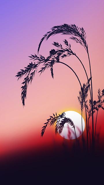 Sunrise Wallpaper iPhone 7 Plus