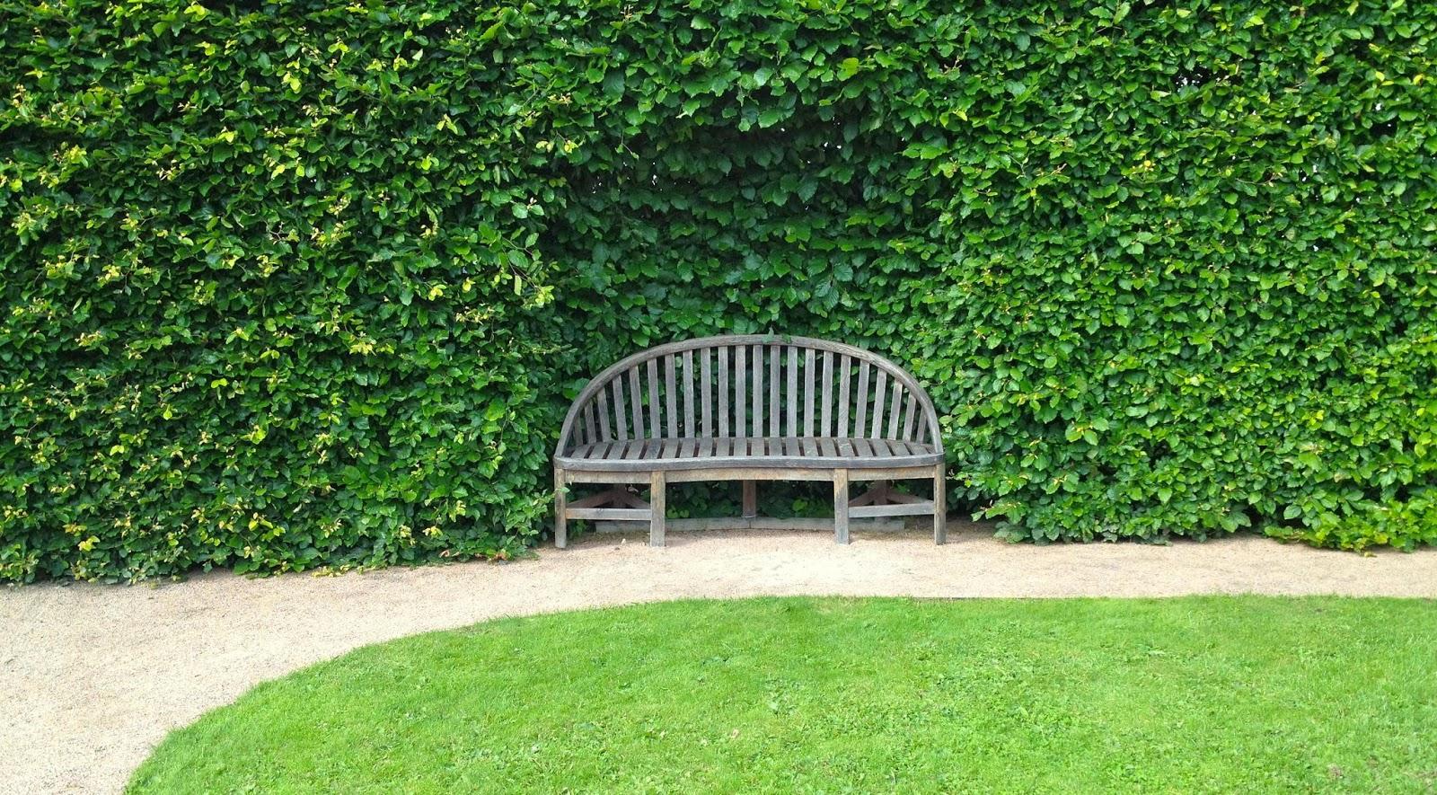 Piante Da Siepi Immagini il mondo in un giardino: sempreverdi per siepi