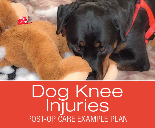 Dawg Business: It's Your Dog's Health!: Cruciate Ligament (ACL/CCL