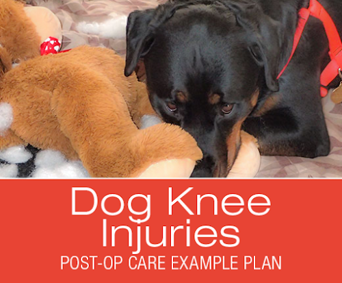 Cruciate ligament aclccl surgery post op care example plan cruciate ligament aclccl surgery post op care example plan dawg business its your dogs health fandeluxe