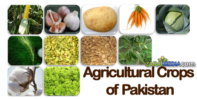 B.Com Part 1 Functional English Essay on Cash Crops of Pakistan