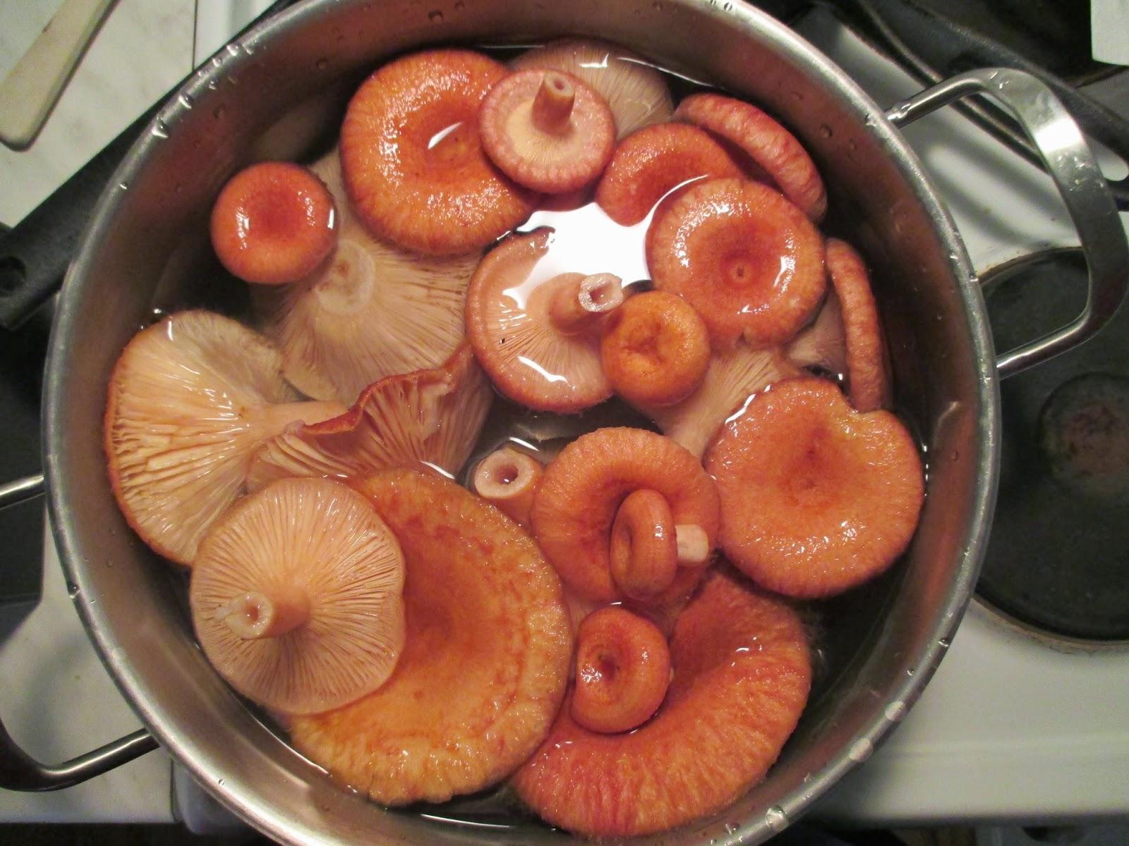 karvarouskut, sienen ryöppäys