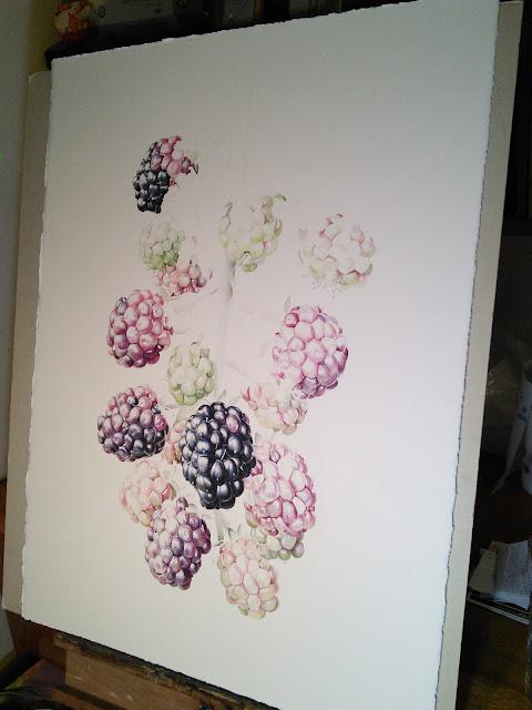 Blackberry branch (Rubus ulmifolius) work in progress