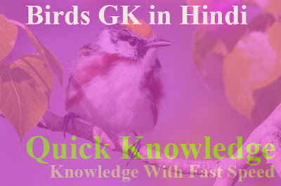 Birds GK in Hindi