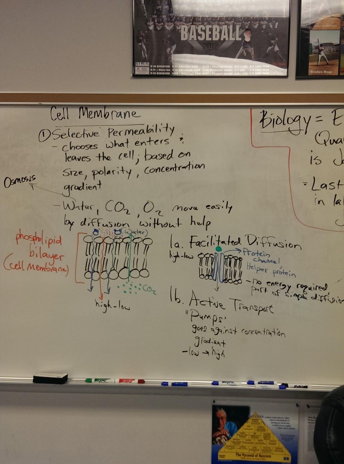 Miner Biology
