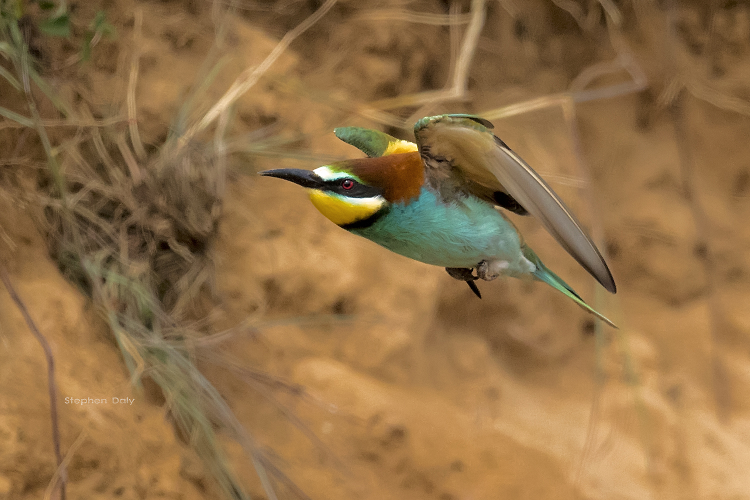 european bee eaters in spain never mind the finnsticks