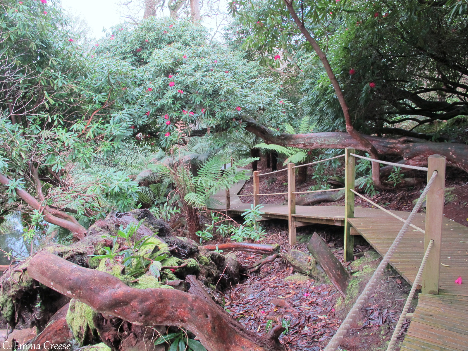 The Lost Gardens of Heligan Cornwall Adventures of a London Kiwi