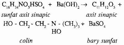TPHH CẢI CANH - Brassica juncea - Nguyên liệu làm thuốc Chữa Ho Hen