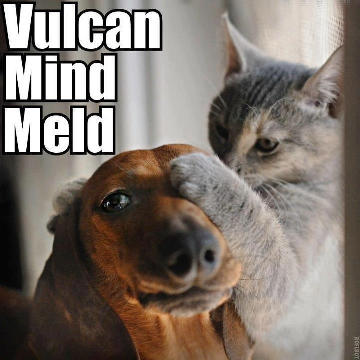 Funny Memes: 30 Funny Animal Captions - Part 4 (30 Pics)