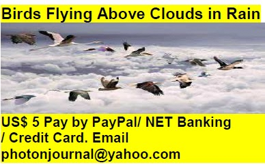 Birds Flying Above Clouds in Rain bird story book