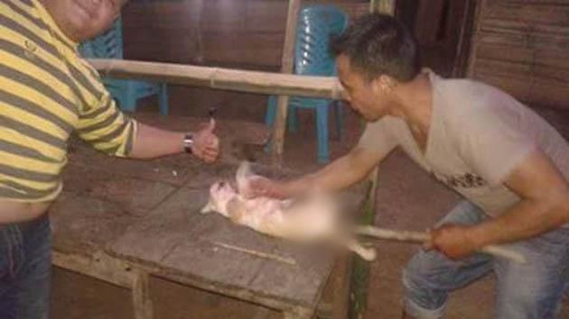 Keji!! 2 Pemuda ini Membantai Kucing dan Memamerkannya Lewat Media Sosial