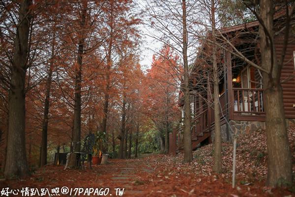 台中沙鹿|MITAKA 3e CAFE-咖啡、夜景、雜貨、夕陽,還有上百棵的落羽松