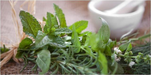 11 Obat Herbal Alami Tradisional Ampuh Menghilangkan Jerawat