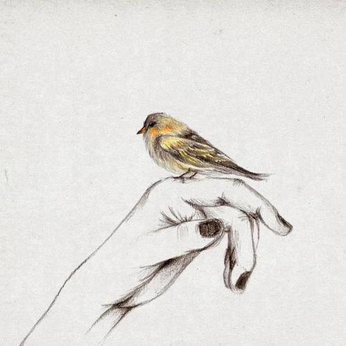 Resultado de imagem para passarinho em movimento