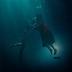"""""""A Forma da Água"""" é um poema encantador sobre encontrar sua verdadeira essência"""