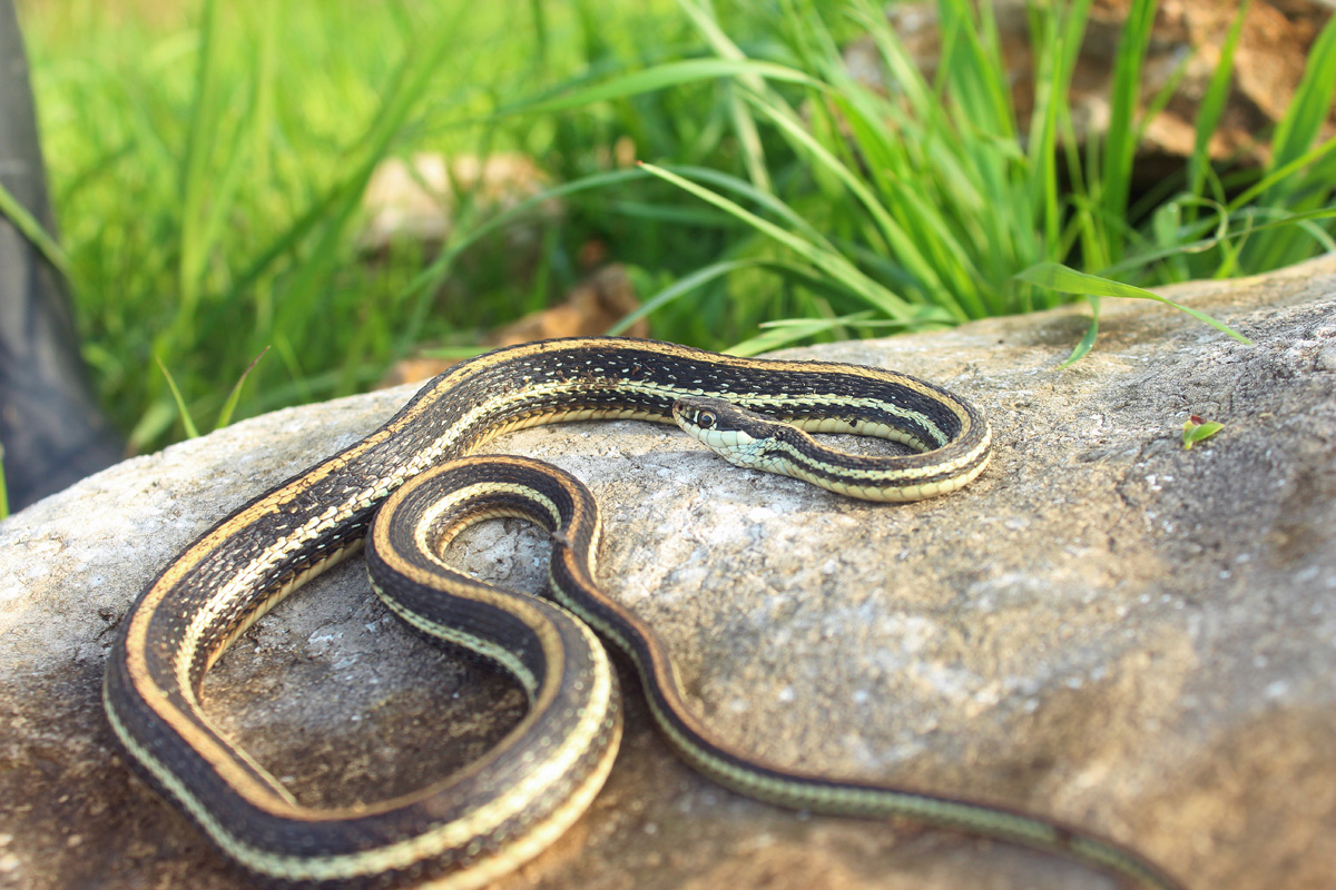 snake - photo #49