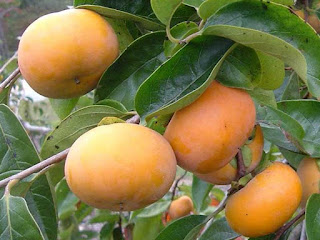 japanese persimmon fruit images