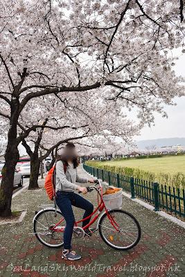 慶州櫻花瞻星台