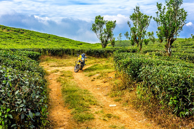 Route to number parai - four wheel track between tea plantations