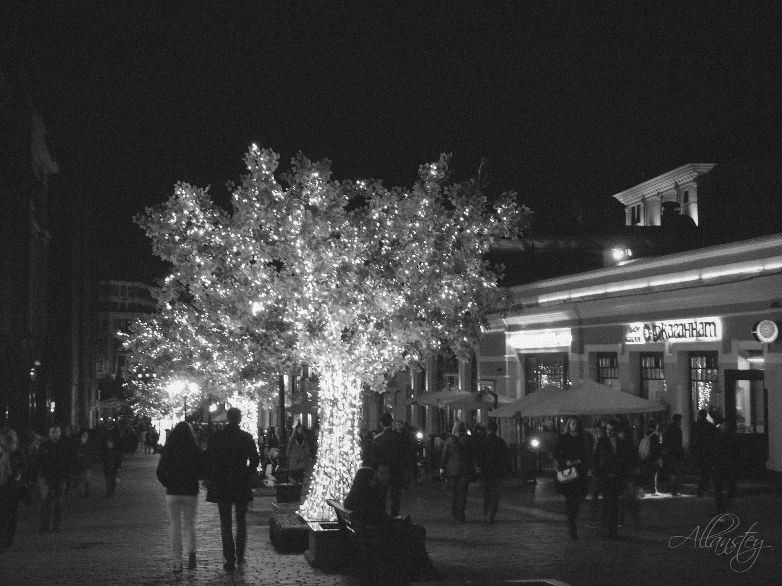 tree illumination