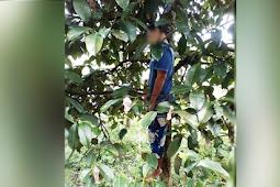 Pria Asal Ciambar Kabupaten Sukabumi Ditemukan Tewas Tergantung di Pohon Manggis
