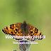 Macro 2016 III mariposas