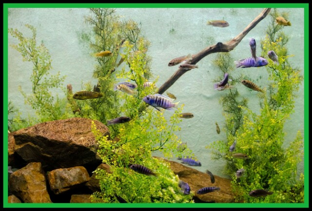 Algae, Plankton,Aquarium,Fish, Biology