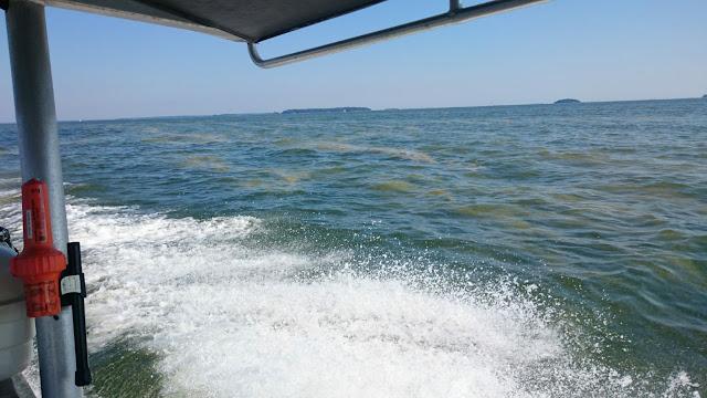 Pärskeitä veneestä, taustalla levälauttaa.
