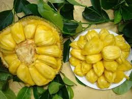 The Amazing Of Health Benefits Jackfruit For Chicken Pox - Healthy T1ps