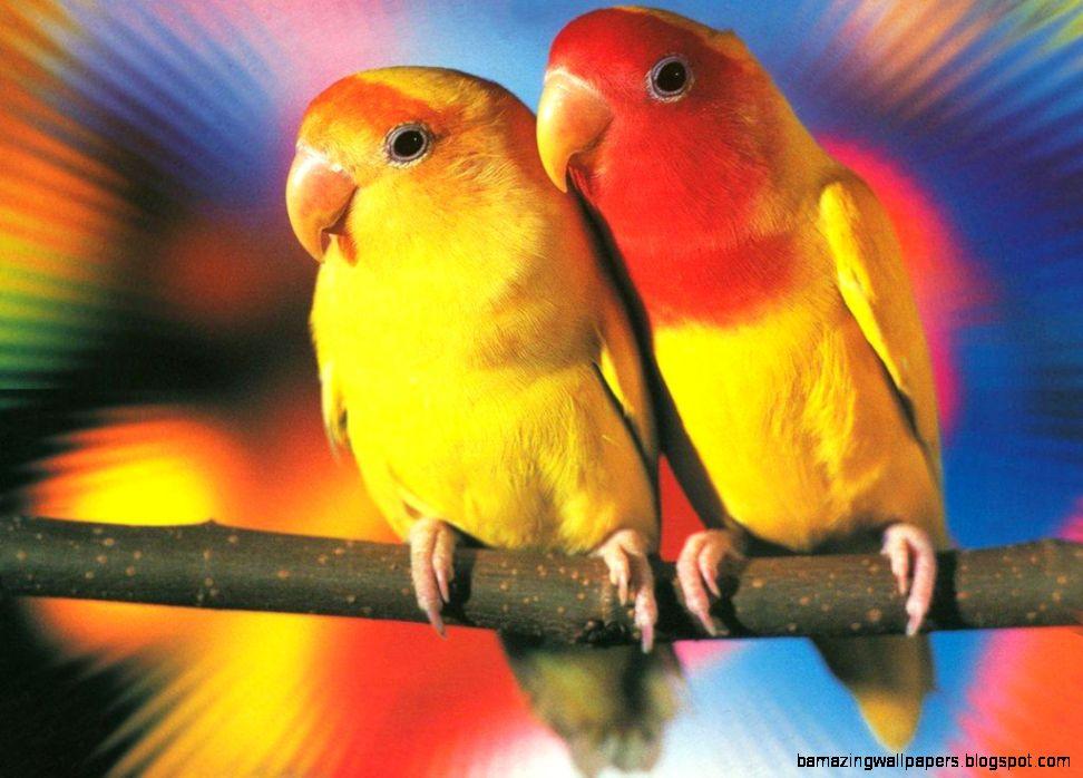 Wallpapers Love Birds: Cute Love Birds Wallpapers