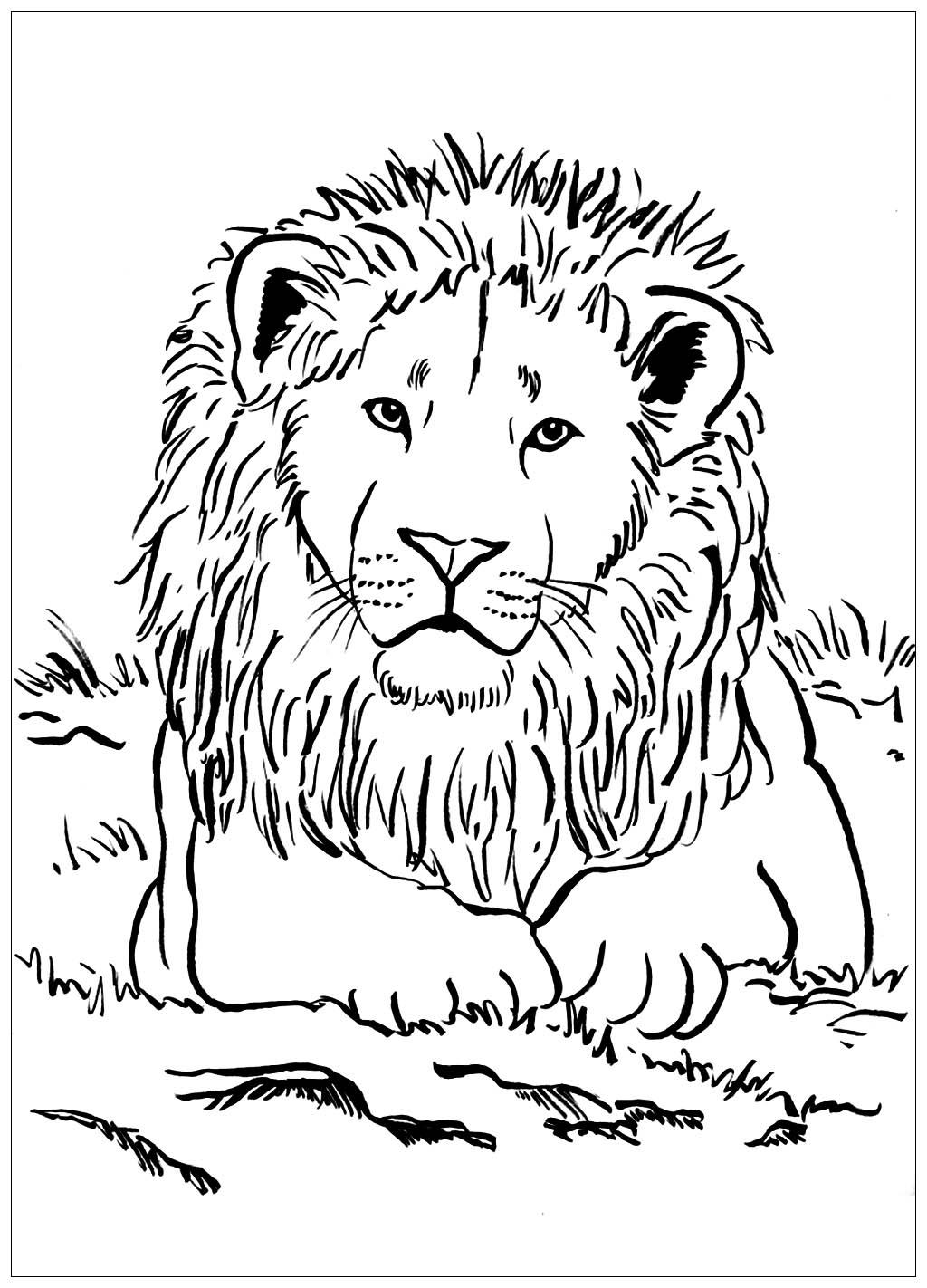 Tranh tô màu con sư tử 1
